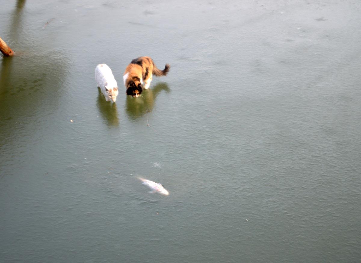 氷の下の魚がどうしても取れない