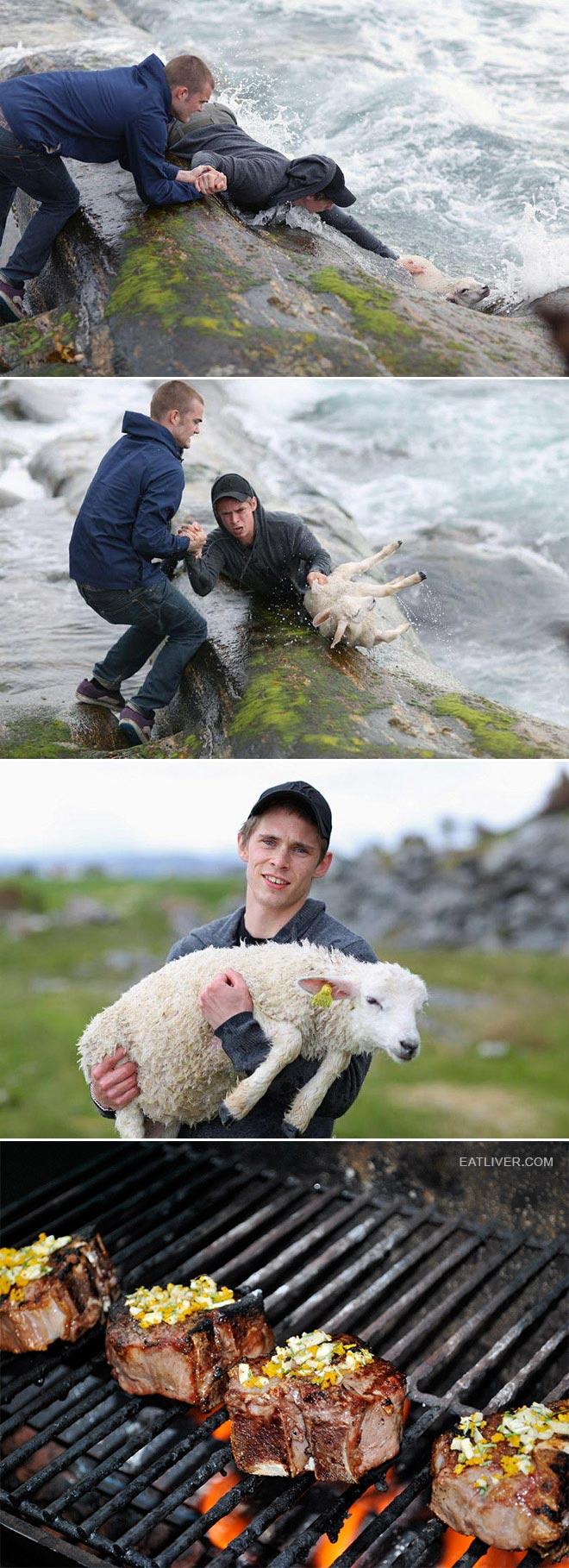 子羊を助けた