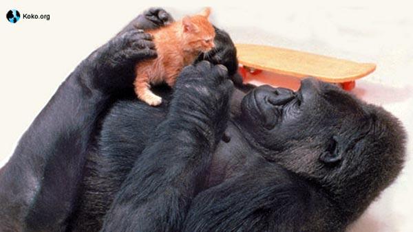 ゴリラのココさんと子ネコ