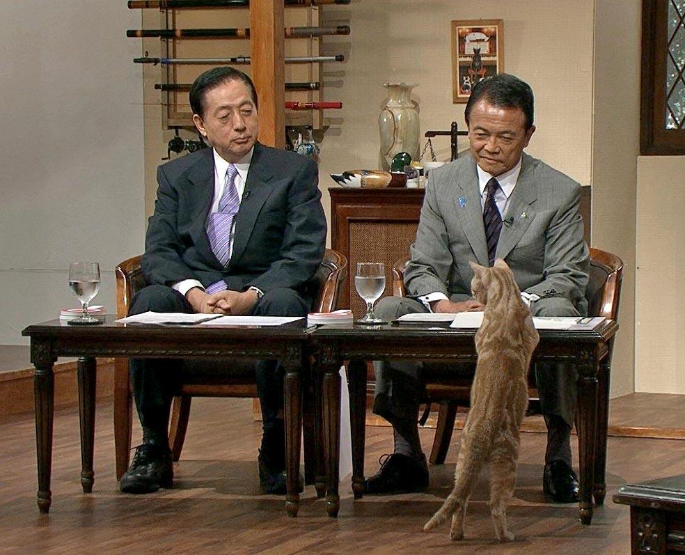 麻生太郎と猫