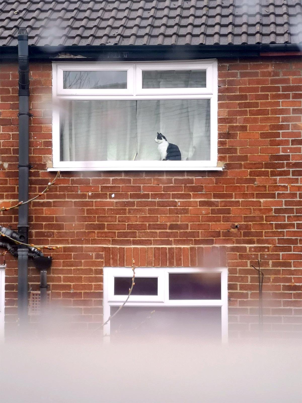 道向かいの猫の名は? そのやりとりが素敵!