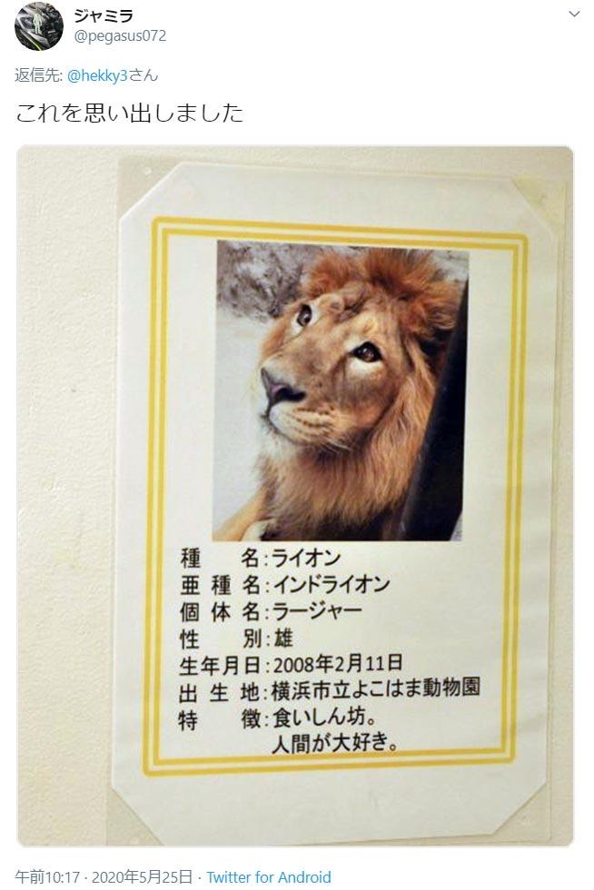食いしん坊のライオンくんは人間が大好き
