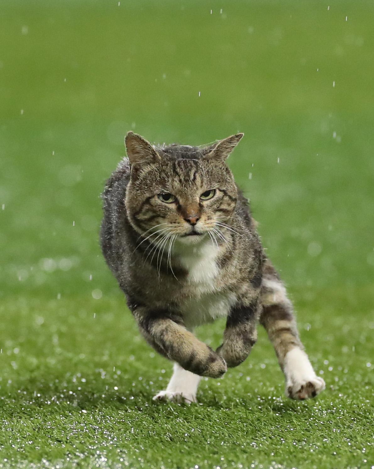 横浜スタジアムを走る猫