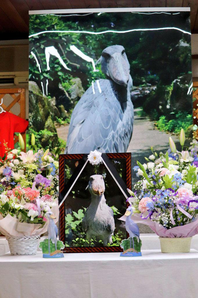 世界最高齢のハシビロコウ「ビル」の献花台