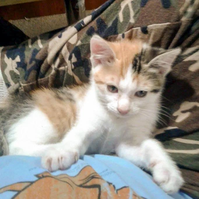 子猫のシーバ、すくすく育つ