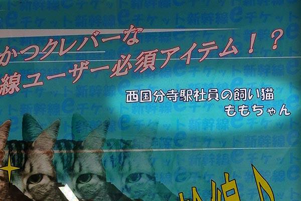 西国分寺駅写真の飼い猫ももちゃん