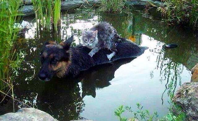 洪水が起きたボスニア・ヘルツェゴビナでのヒトコマ