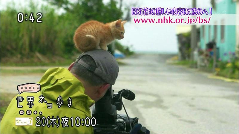 岩合さんになつきすぎる子猫