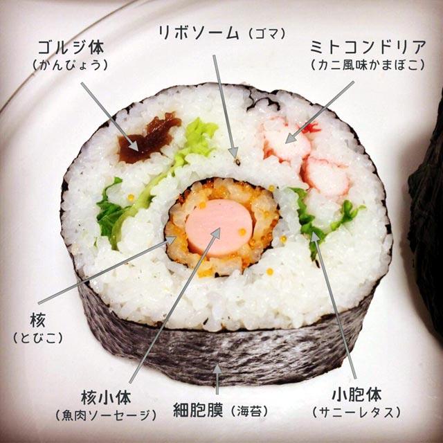 動物細胞寿司か?