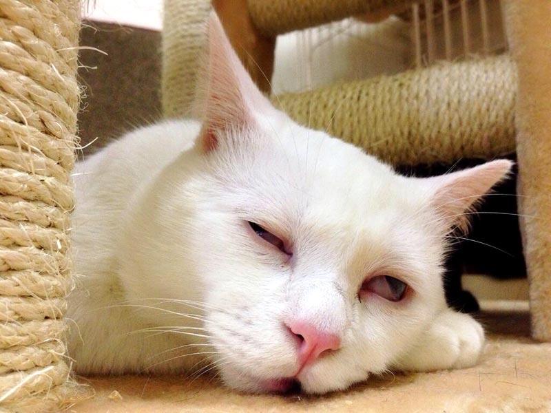 お昼寝の可愛い顔を見てやろうと、ワクワク覗いてみればこれだよ