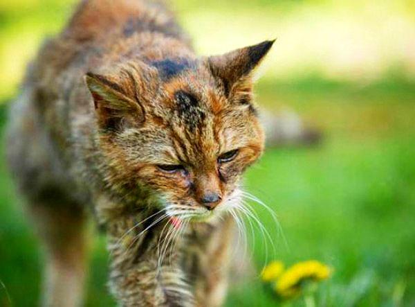 世界最高齢の猫ポピーちゃん死亡
