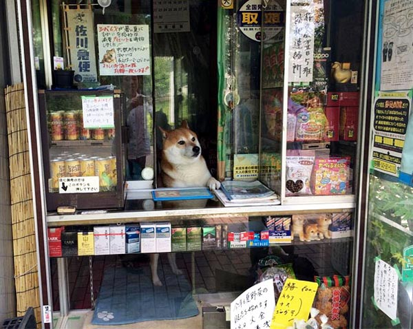武蔵小金井のタバコ屋さんの看板犬・シバくん
