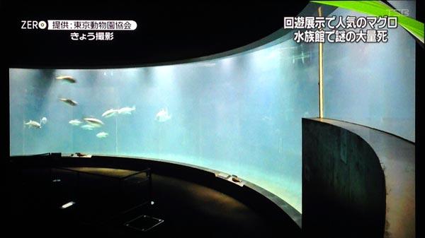 葛西臨海水族園でマグロが謎の大量死