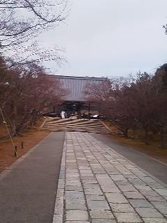 仁和寺に来たよ!