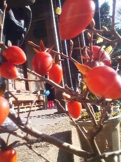 入口の鉢植えを激写