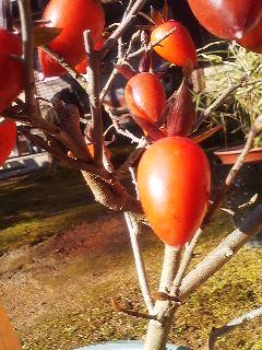 柿?なんだろう
