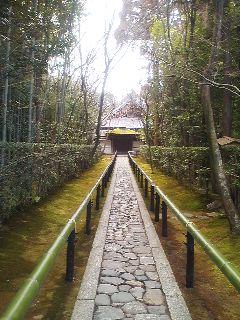 高桐院の竹林道。静かで綺麗ですてき!でも雨降ってきちゃった
