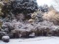 鶴亀の庭の鶴側の奥の方。鶴はKTで撮ってなーい