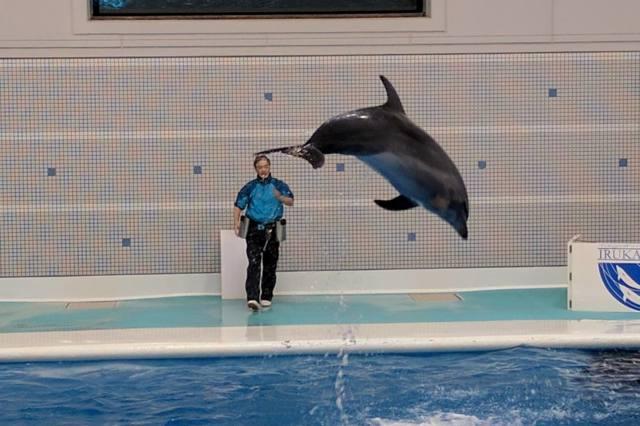鹿児島水族館のイルカのショー
