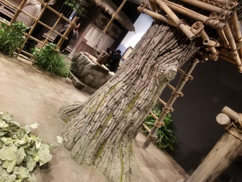 クスノキは鹿児島の名木だ
