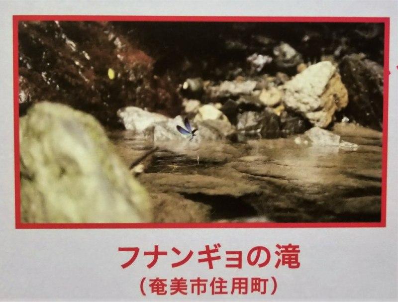 12.フナンギョの滝(鹿児島県奄美市住用町)