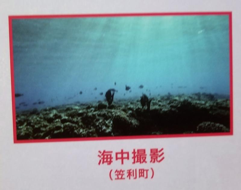 13.海中撮影(鹿児島県笠利町)
