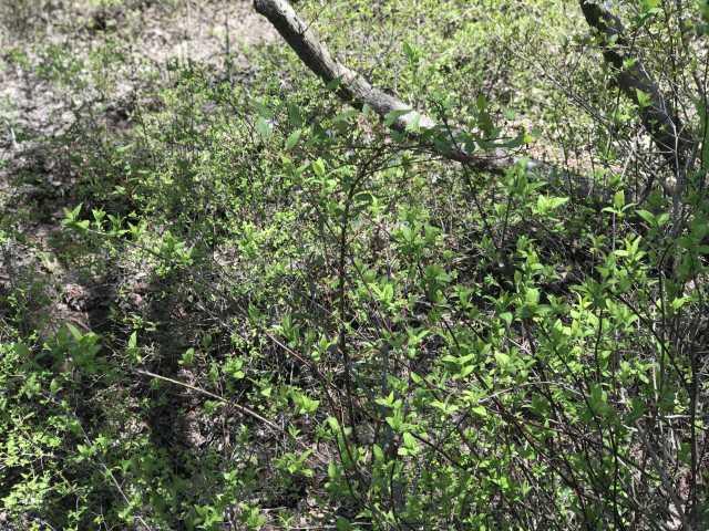 序盤は植生も高山特有の木々が生い茂っています