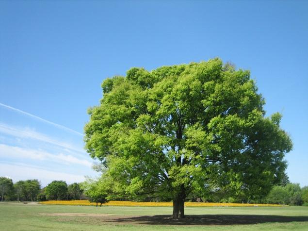 やがて世界から「木」が消えるんですって。 - CHUFF!! チャフで行こうよ。