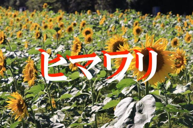 f:id:gemini-yahata:20201111152335j:plain
