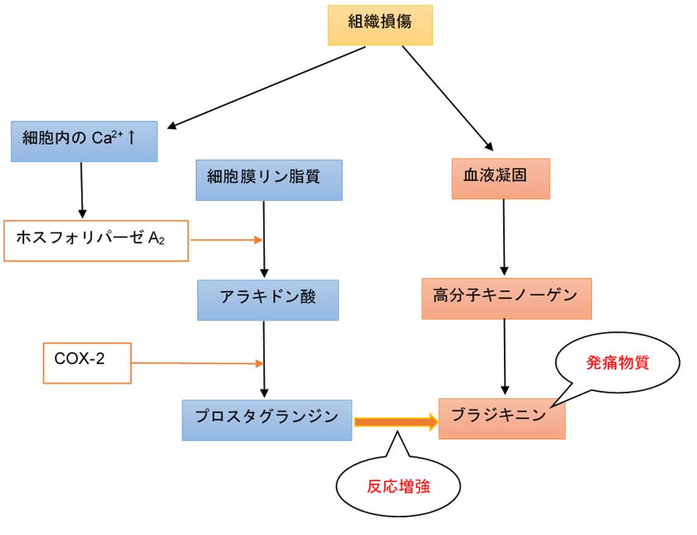 f:id:gene_ptkh:20190310230603p:plain