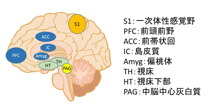 f:id:gene_ptkh:20190328002844p:plain