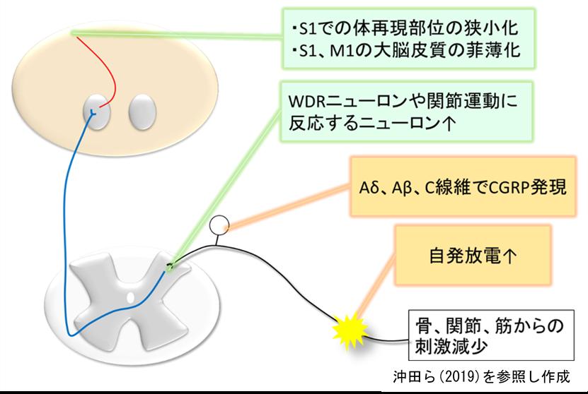 f:id:gene_ptkh:20190430115247p:plain