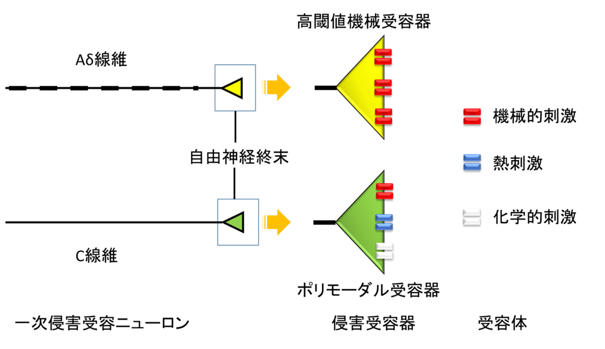 f:id:gene_ptkh:20190518230421p:plain
