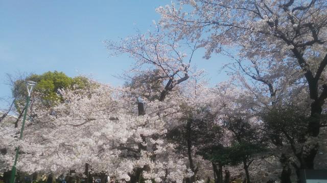 f:id:genkai35sai:20200404203518j:image