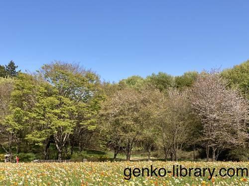 f:id:genko-library:20210411052056j:plain