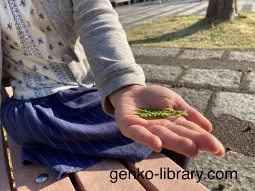 f:id:genko-library:20210411052129j:plain