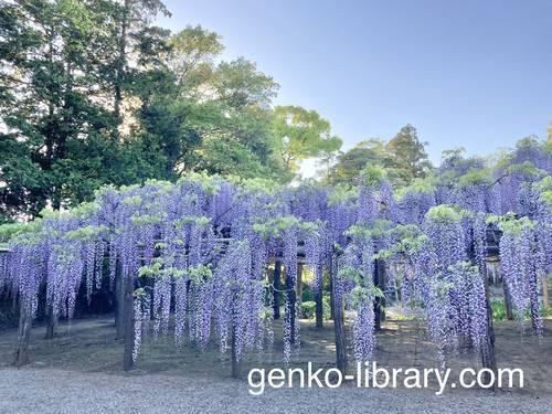 f:id:genko-library:20210423054159j:plain