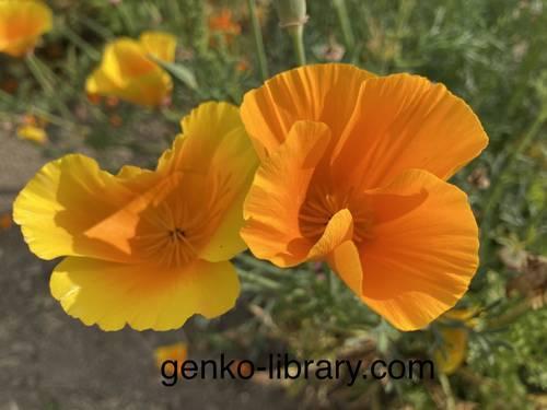 f:id:genko-library:20210518151023j:plain