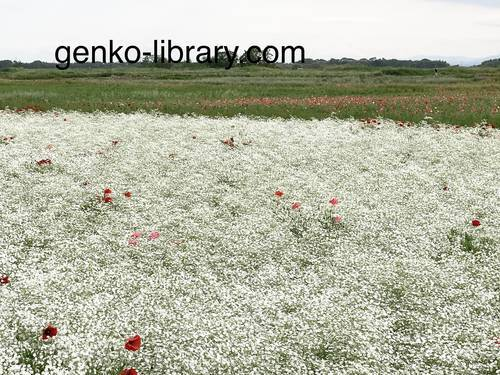 f:id:genko-library:20210518151030j:plain