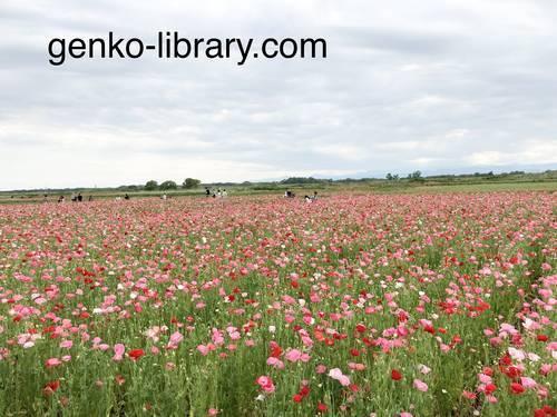 f:id:genko-library:20210518151051j:plain