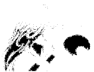 f:id:genshiohajiki:20161102021022p:plain