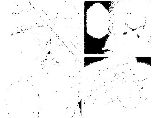 f:id:genshiohajiki:20170131032859p:plain