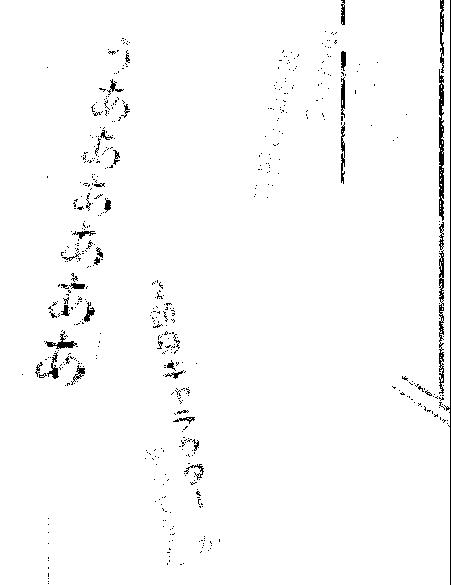 f:id:genshiohajiki:20170401011225p:plain