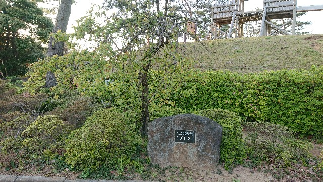 f:id:genshiohajiki:20191215234623j:image