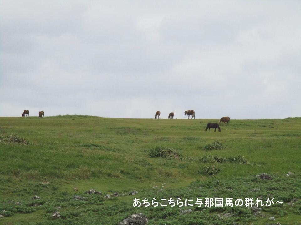 f:id:genta-san:20200524020431j:plain