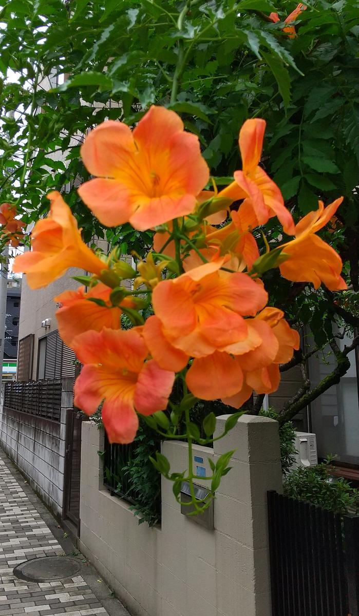 f:id:genta-san:20200906123214j:plain
