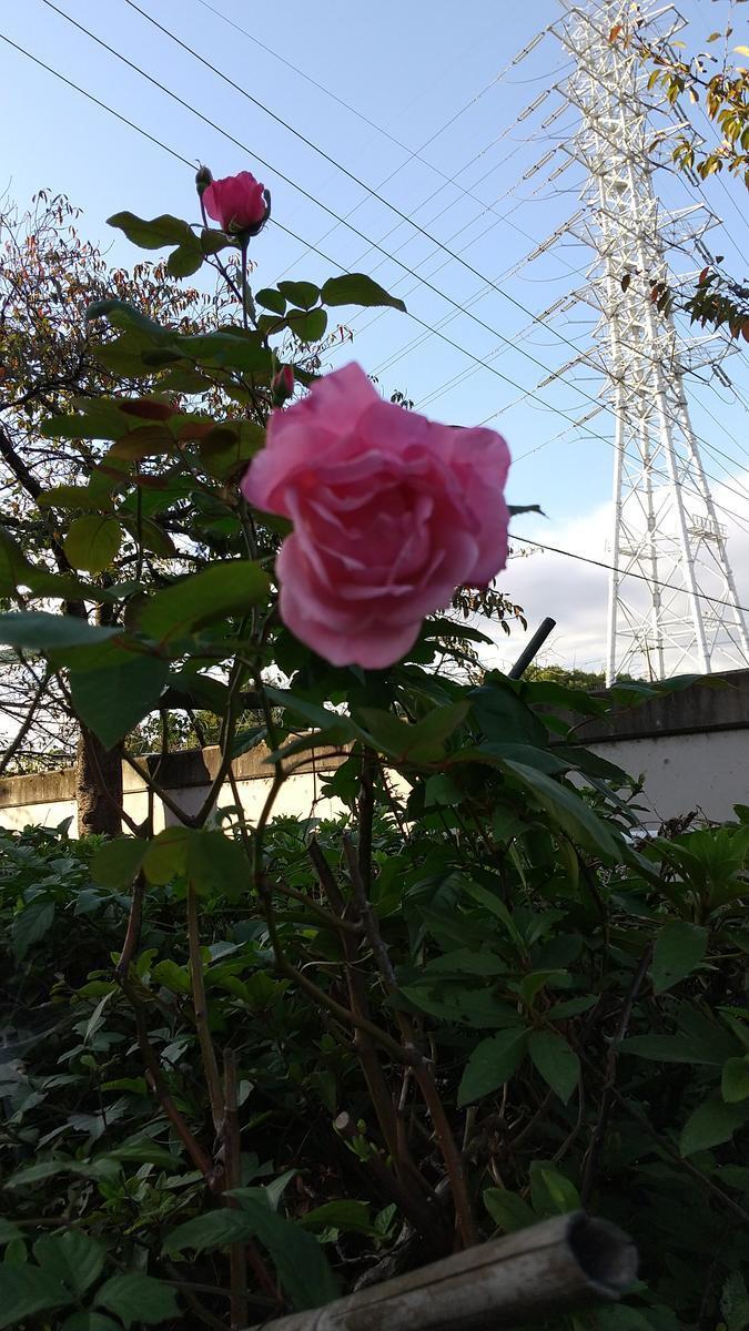 f:id:genta-san:20201024174741j:plain