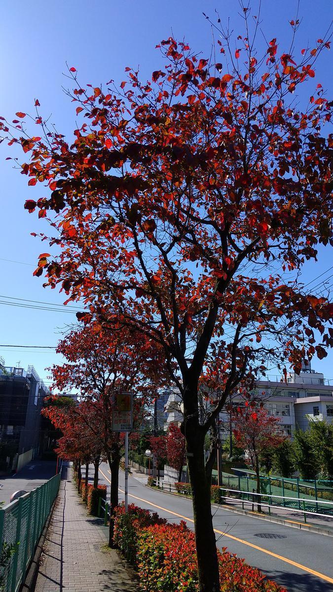 f:id:genta-san:20201025111101j:plain