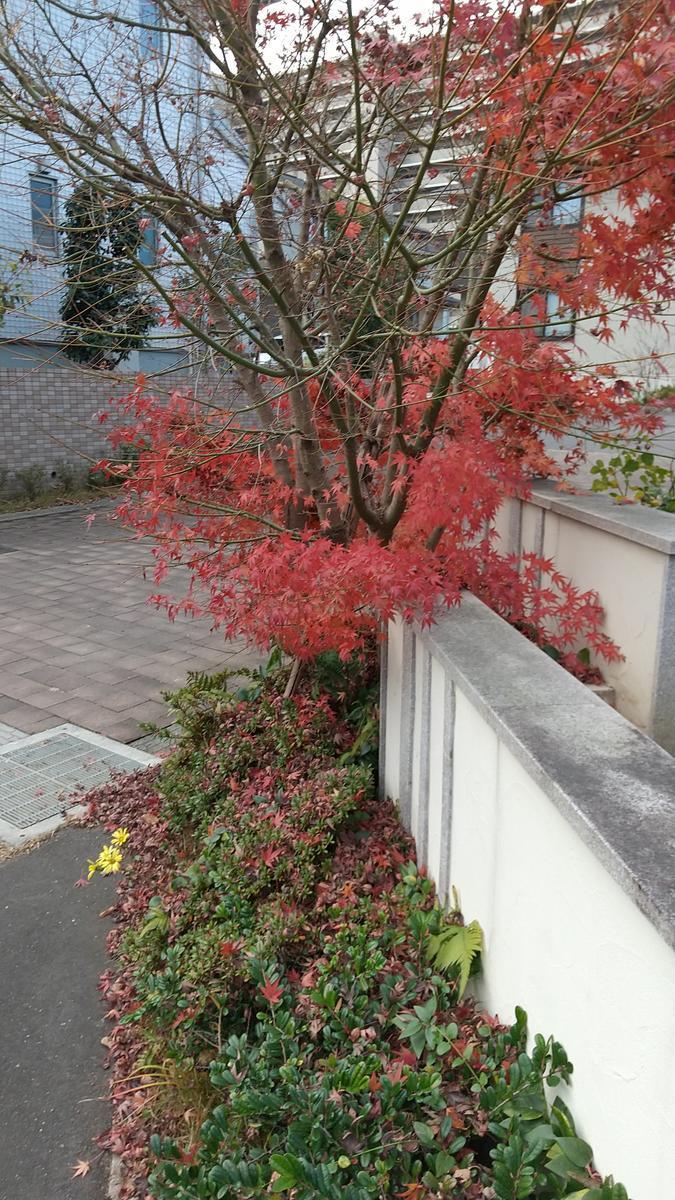 f:id:genta-san:20201214175156j:plain