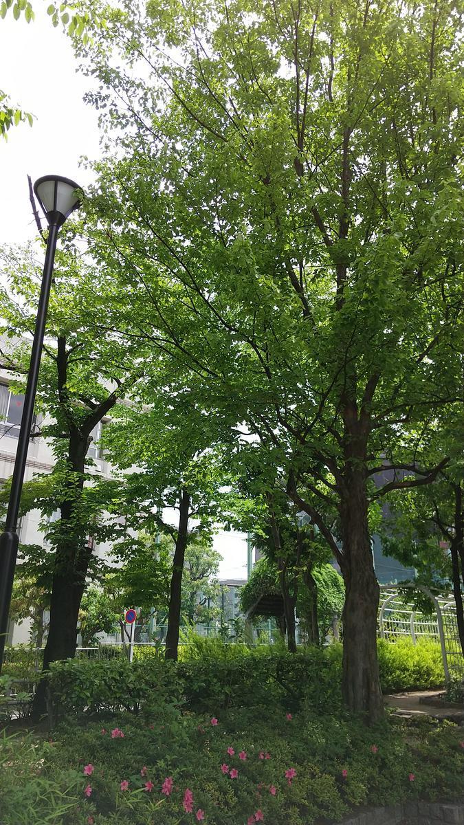 f:id:genta-san:20210515184636j:plain